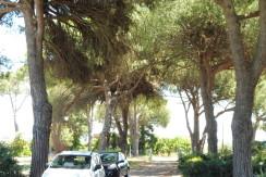 L40- Nettuno Via della Pineta