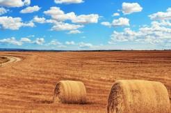 T11- Nettuno Via della Fonderia – Terreno agricolo